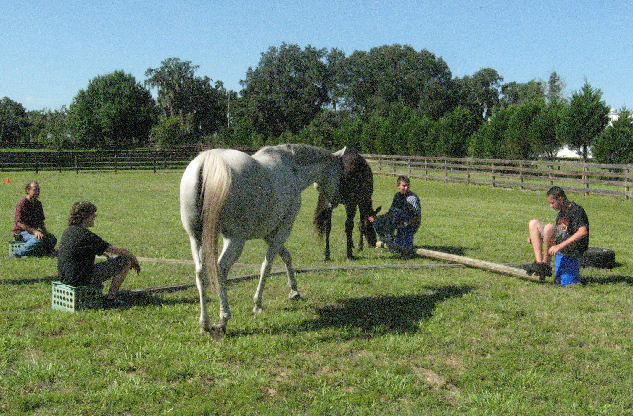 Course: Equine Anatomy and Health Considerations | Avalon ...