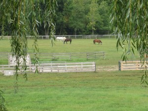 Their new pastures...how tranquil!